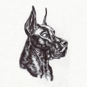 Great Dane: Alpha Dog