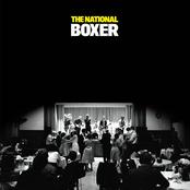 Boxer (Standard Version)