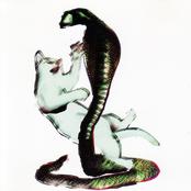 Les Savy Fav: The Cat and the Cobra
