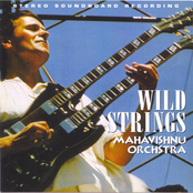 Wild Strings
