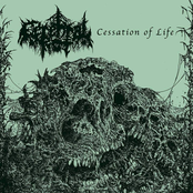 Cerebral Rot: Cessation of Life