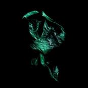 Stenny - Swordfish