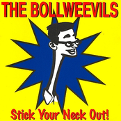 Bollweevils: Stick Your Neck Out