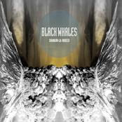 Black Whales: Shangri-La Indeed