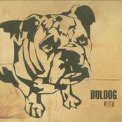 Buldog Płyta