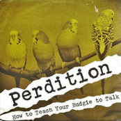 How To Teach Your Budgie To Talk