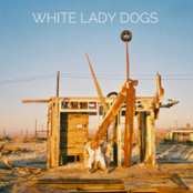 All Things Blue: White Lady Dogs