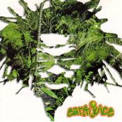 Earthjuice
