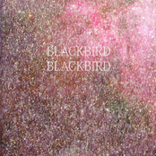 Blackbird Blackbird: Summer Heart
