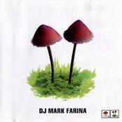 Mushroom jazz 2