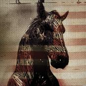 Live Horses