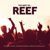 The Best Of Reef