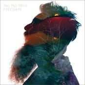 Tall Tall Trees: Freedays