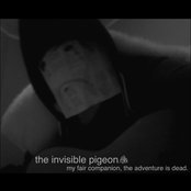 the invisible pigeon