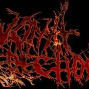 vomit erection