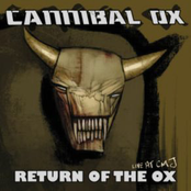 Return of the Ox