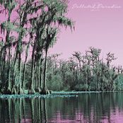 Polluted Paradise 2