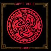 Gov't Mule: Dose