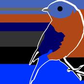 bluebird handwriting