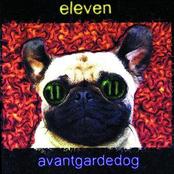 Avantgardedog