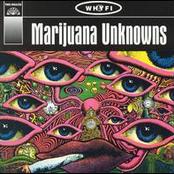 Marijuana Unknowns