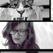 kittens of the internet