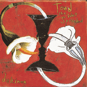 Toad The Wet Sprocket: Dulcinea