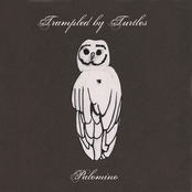Trampled by Turtles: Palomino