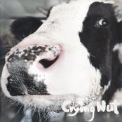 OK목장의 젖소