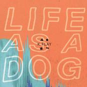 K. Flay: Life as a Dog