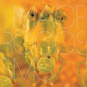 Macrocosms