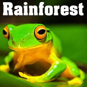 Rainforest - Sounds of Nature