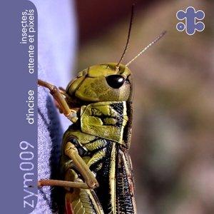 Insectes, Attente et Pixels