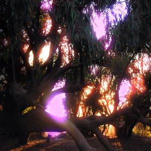 Where the Lights Meet