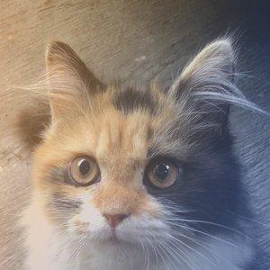 Avatar for Homie Cat