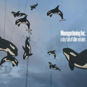 A Sky Full Of Killer Whales