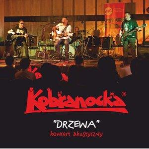DRZEWA - koncert akustyczny