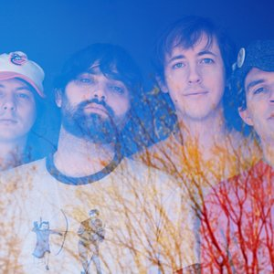 Image pour 'Animal Collective'