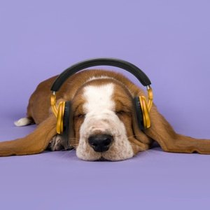 Avatar de Sleepy Dogs