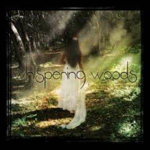 Fairy Woods Reimagined