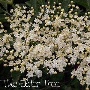 Avatar for The Elder Tree