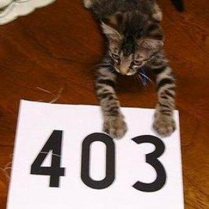 Avatar for 403