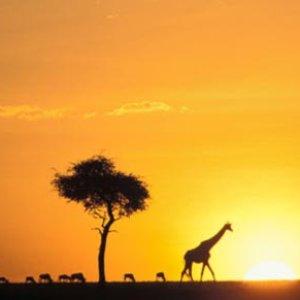 Avatar de Safari Ways