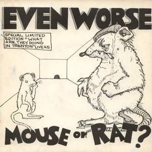Mouse or Rat?