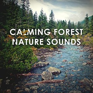 Avatar for Calming Forest