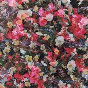 Аватар для Лиловые Тюльпаны