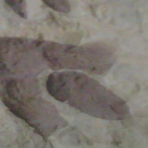 Avatar for losdinosaurios