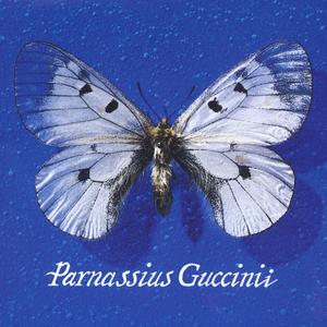 Parnassius Guccinii