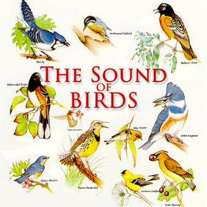 The Sound Of Birds