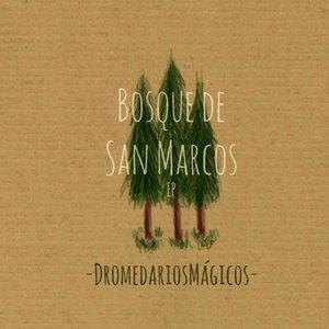 Bosque de San Marcos